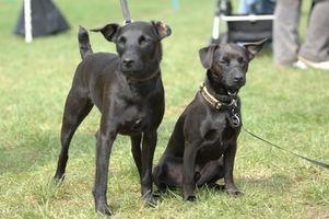 Curación natural para ayudar a los perros con piel seca