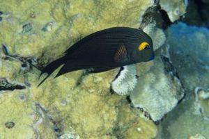 Es un esterilizador UV está mal para un acuario de arrecife?