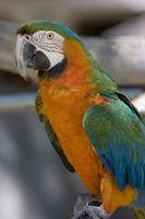 Cómo dejar de papagayos de plumas Puntear