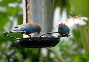 Actividades del pájaro de los niños
