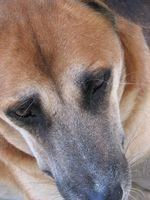 Las cataratas perro vs. Objetivos, engrosadas