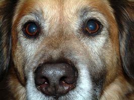 Problemas con los dientes del perro que causan problemas de alimentación