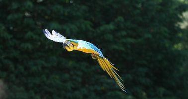 Cómo ajustar las plumas de cola