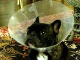 Las alergias de moho en los perros