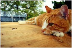 Tratamiento del cáncer de gato
