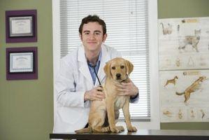 Los signos de una perforación del tímpano en un perro