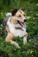 Remedios caseros para perros rascarse el pelo de sus cuellos