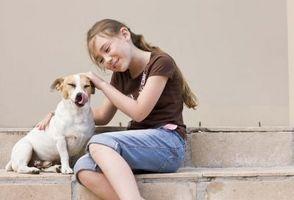 Cómo hacer que un perro rescatado como usted