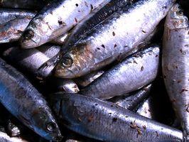 Cómo Filete de sardinas frescas