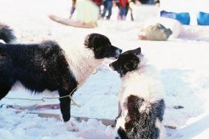 ¿Qué razones ¿Un perro para no permitir que otro olerlo?