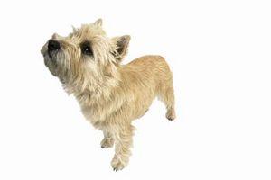 Cómo obtener Nudos Fuera de mis perros de pelo