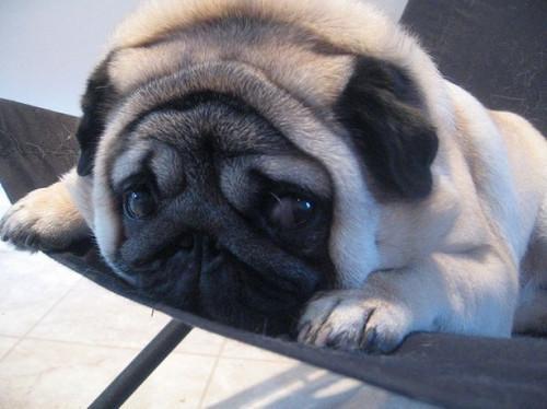 Información acerca de los perritos del barro amasado