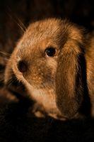 ¿Cómo deshacerse de un conejo de la piel de los ácaros
