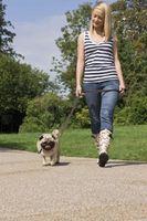 Remedios caseros para el Mantenimiento de la pata del perro