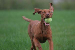 Cuáles son los tratamientos para osteofitos en el hombro de un perro?