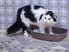 Trucos para deshacerse del olor de la orina del gato