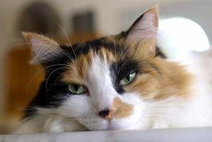 ¿Qué causaría pegajosas Las secreciones de un drenaje continuo de la boca de un gato?