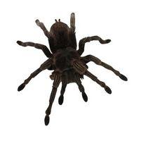Las arañas de Delaware