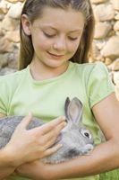 ¿Cómo puedo Desodorice una jaula de conejo?