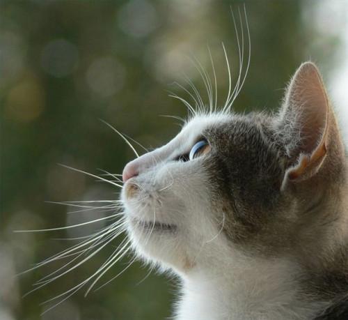 Cómo cuidar a un gato con la Diarrea