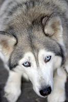 Lo que es eficaz en la orina del perro de limpieza?