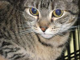 Cambios de comportamiento en los gatos