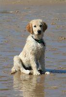 Acerca de los tumores mesenquimales en perros