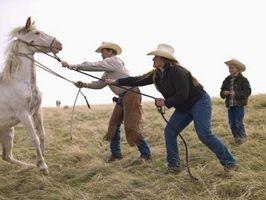 Cómo entrenar a un caballo que juguetes con Usted