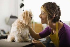 Cómo vender su perro en un Newpaper