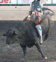 Las barras con toros mecánicos en Ohio