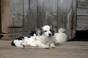 Enfermedades de la piel del perro y del gato