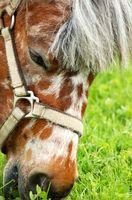 Cómo poner el peso en un caballo de 30 años de antigüedad