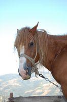 Cómo enseñar a un caballo para detener cuando se utiliza la línea de acometida