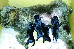 Tipos de gusanos en heces de perro