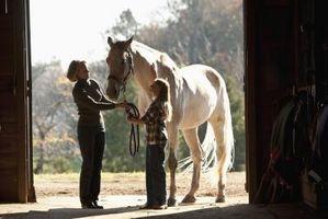 Cómo romper un mal hábito con los caballos