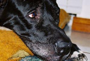 OTC Medicamentos para la diarrea del perro