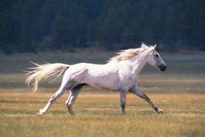 Descarga amarilla de la nariz de un caballo