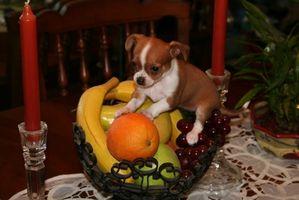 Lista de los seguros de personas Alimentos para perros