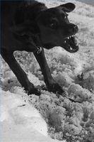 Extremidades del entrenamiento del perro por mal comportamiento