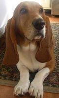 Efectos secundarios de Tresaderm para perros