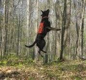 ¿Qué es lo tenias perro verá como en las heces?