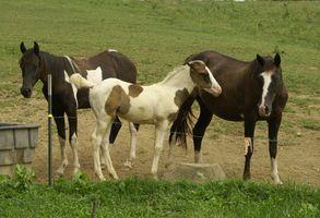 Instalación de una cerca electrónica para los caballos
