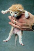Cómo conseguir los gatitos para respirar después de nacer