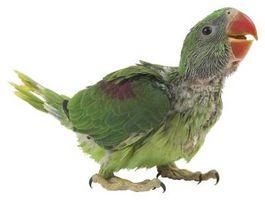 Las bacterias que afecta a las aves