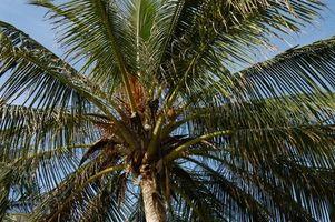 Los mejores destinos de vacaciones del Caribe