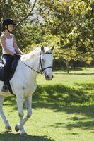 Cómo enseñar a un caballo del trote extendido