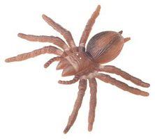 Las arañas en el noroeste de Wisconsin
