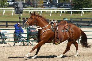 Cómo balancear Cuando en vías de un caballo en un círculo