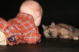 Gato Alergias y bebés