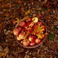 ¿Cómo Mantener y conservar los alimentos en la Edad Media?